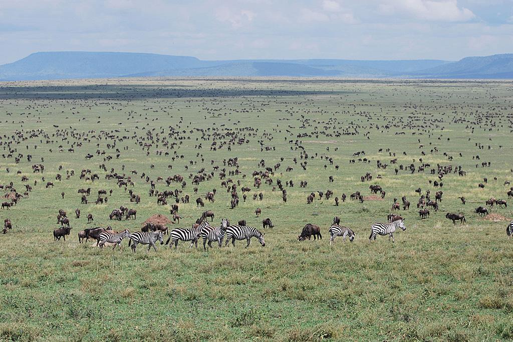 Five Hills Track - Central Serengeti - May 28th