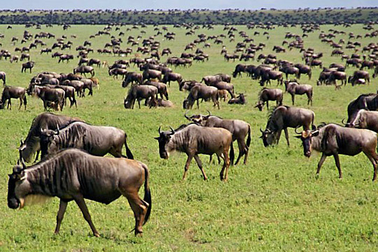 March 20, 2010 - Eastern Serengeti Plains near Gol Kopjes