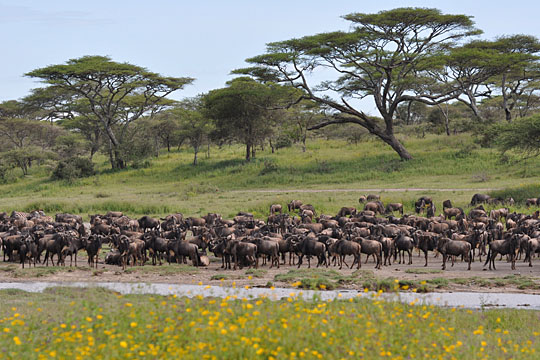 Lake Ndutu - South Serengeti - April 2010
