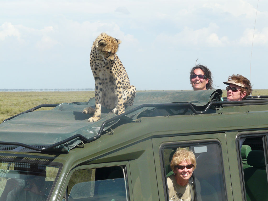 Cheetah on Vehicle 1