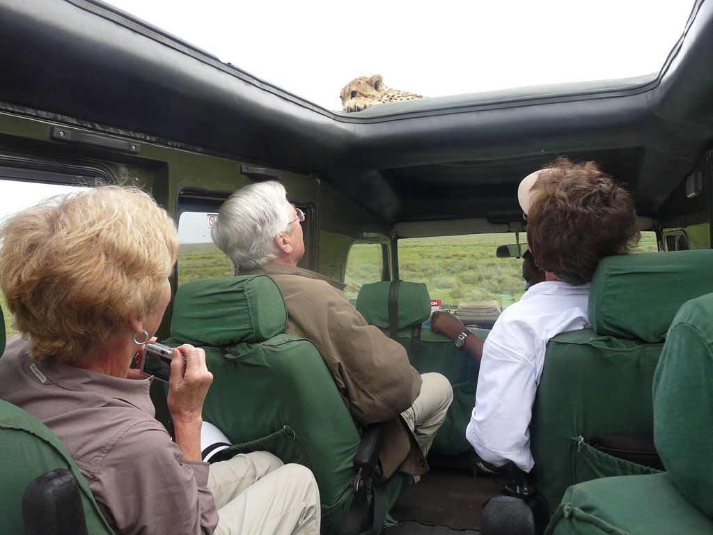 Cheetah on Vehicle 2