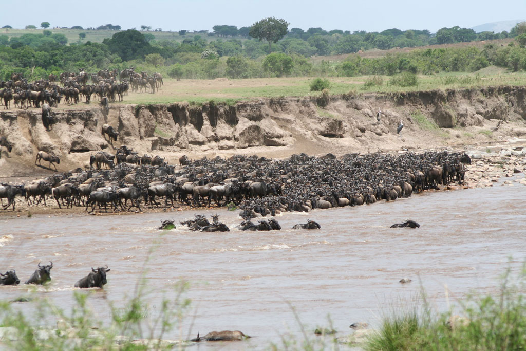 The Migration and the Mara