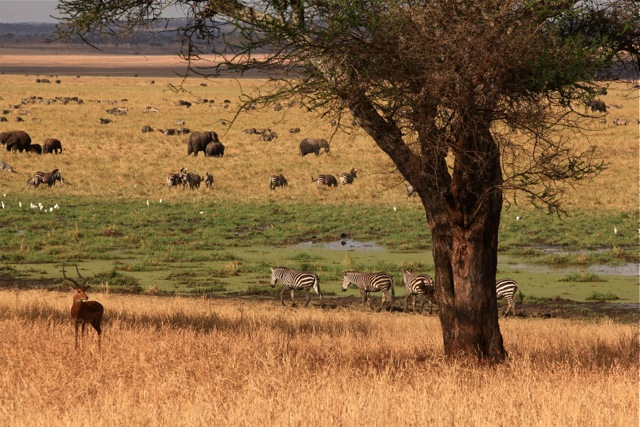 Serengeti Was Bursting with Life 1