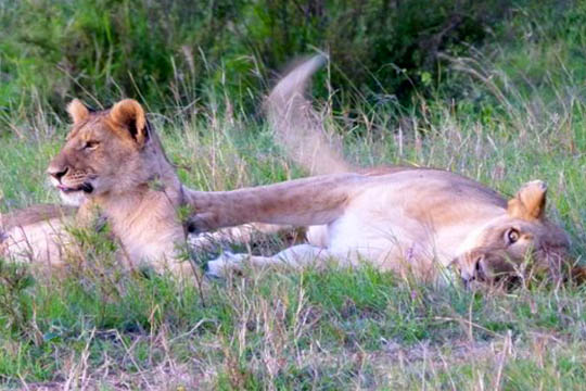 Our Incredible 12-day Safari Adventure_7