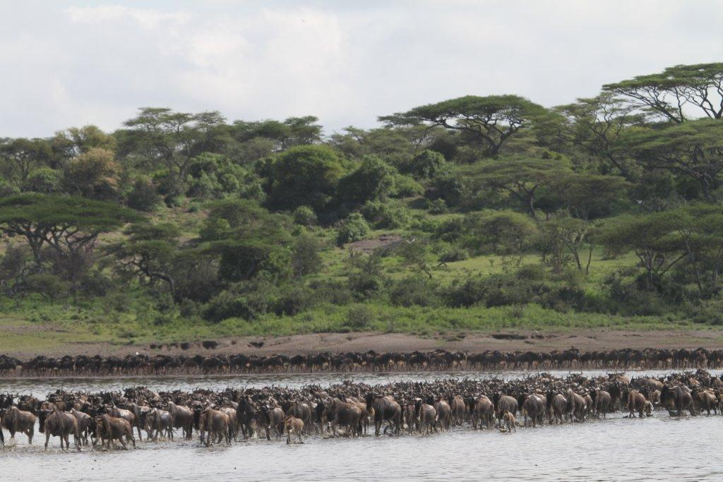 Dawn – Page 2 – A Tanzania Travelogue