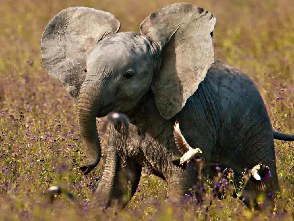 Baby elephant orphanage opens in arusha tanzania a - Babyzimmer elefant ...