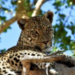Andrew and Casssandra P Safari Photos_Feb 2018 (14)