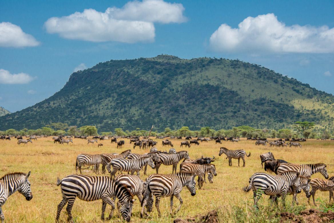 searching african skies wild sarah