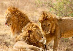 Words Can't Describe Our Safari!