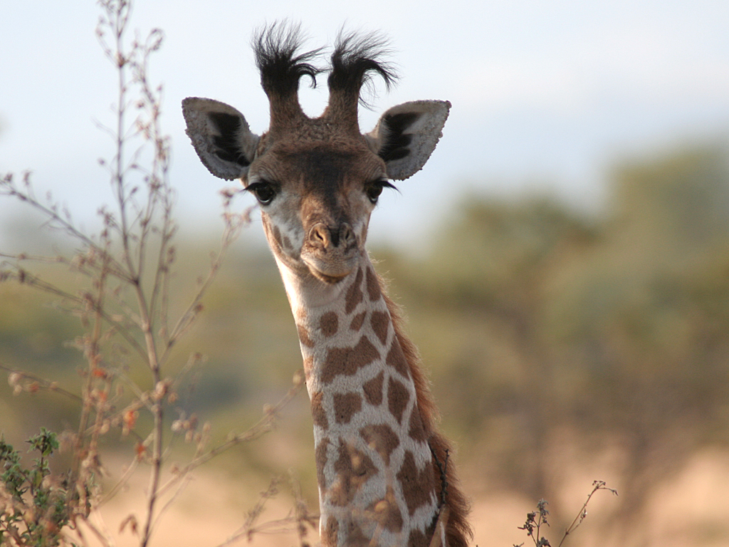 August Safari_0009_Layer 57