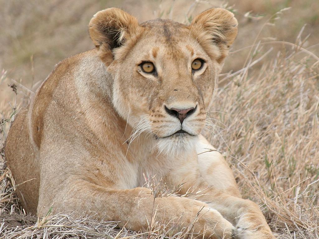 August Safari_0011_Layer 61