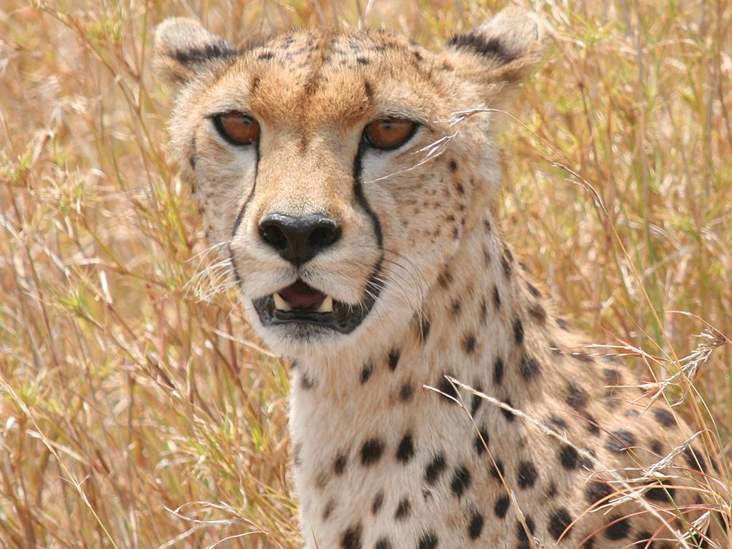 August Safari_0058_Layer 7