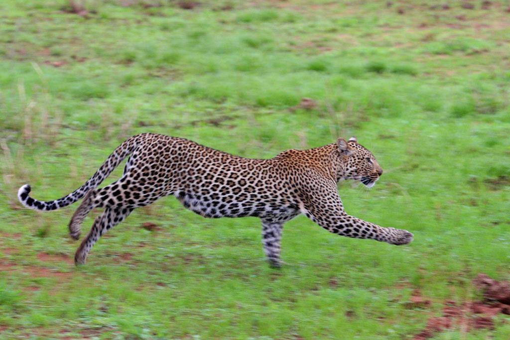5 - Running Leopard