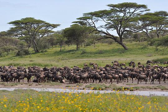 Lake Ndutu - South Serengeti - April 2010