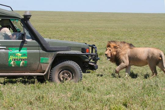 Africa Dream Safaris Film Shoot - 1 - April 2010