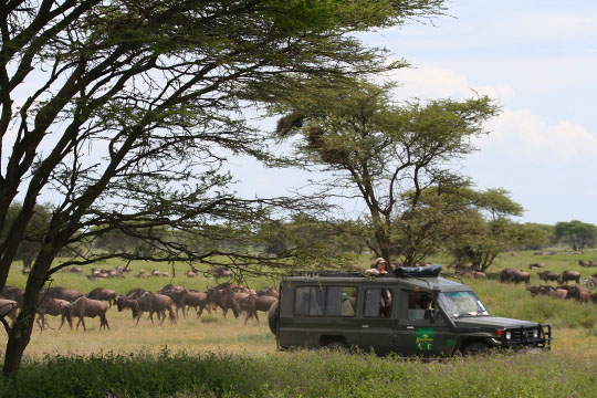 Africa Dream Safaris Film Shoot - 5 - April 2010