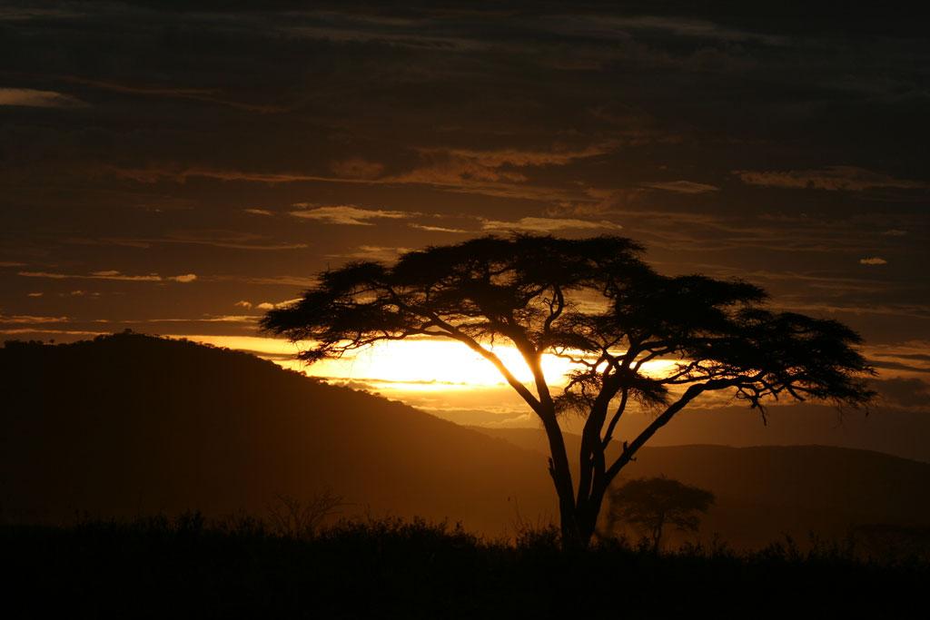 Acacia Tree Sunset