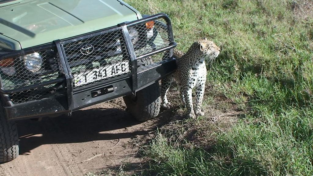 Close-Leopard