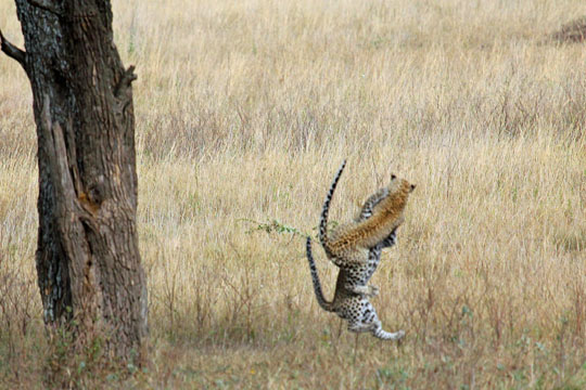 Hewitt African Safari August 2011_0000_Layer 4