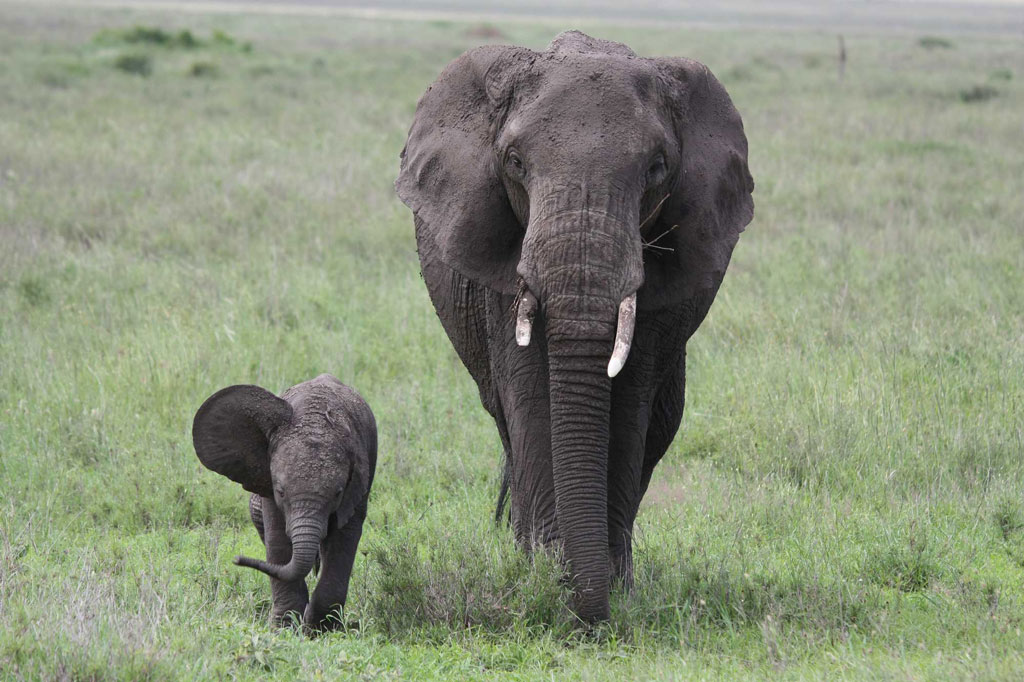 Mom-and-Calf