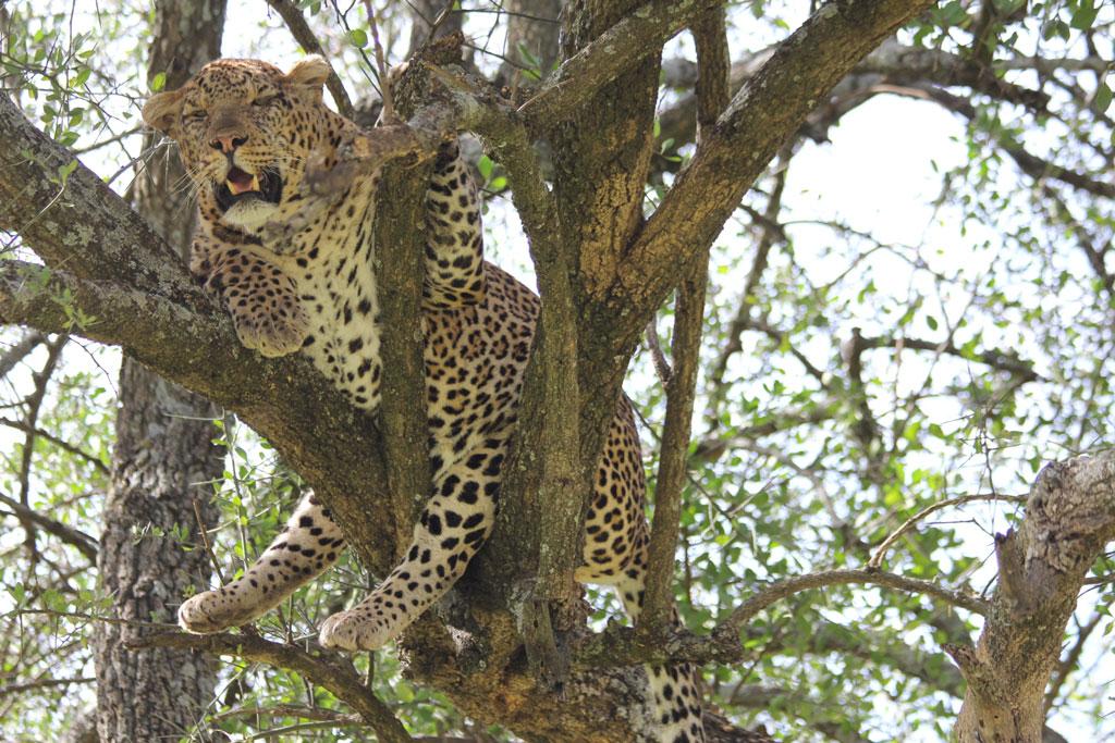 Animals Mating...