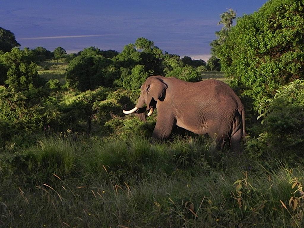 Ngorongoro-Resident