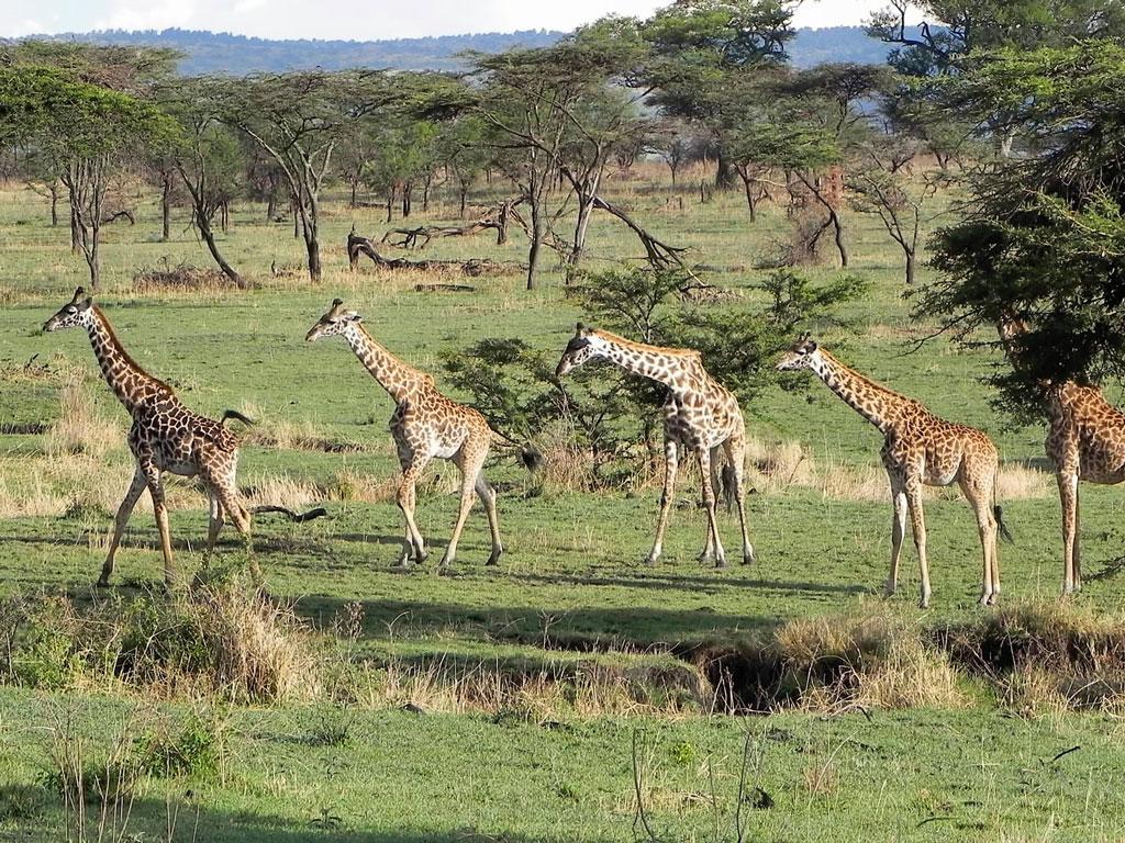 North Serengeti