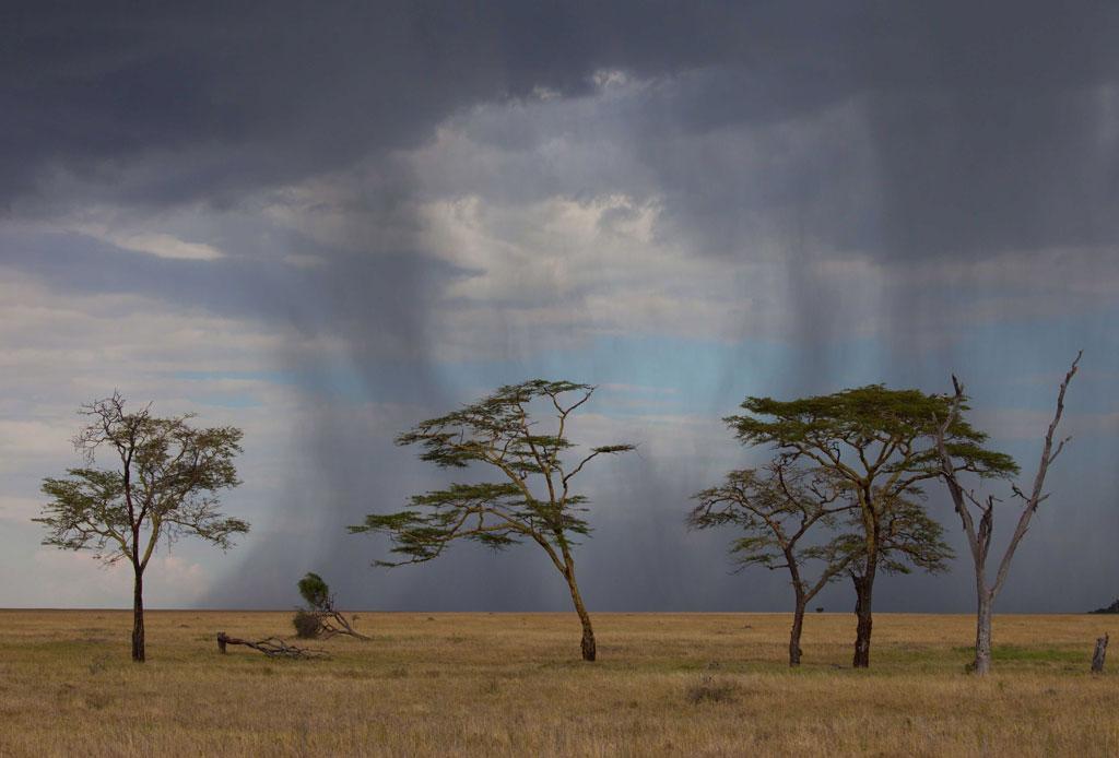 Serengeti-Rain