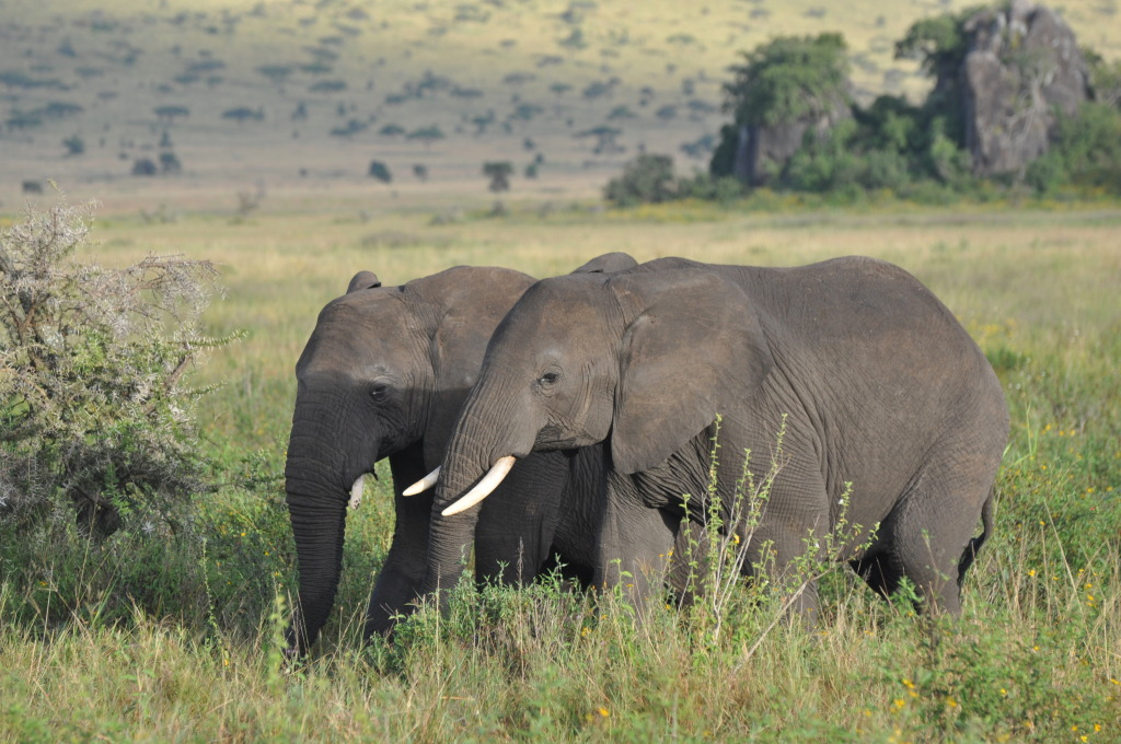 Two Tembo