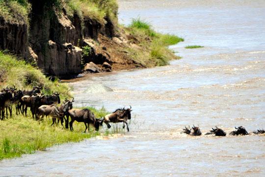 Weisberger Africa Safari September 2011_0004_Layer 1