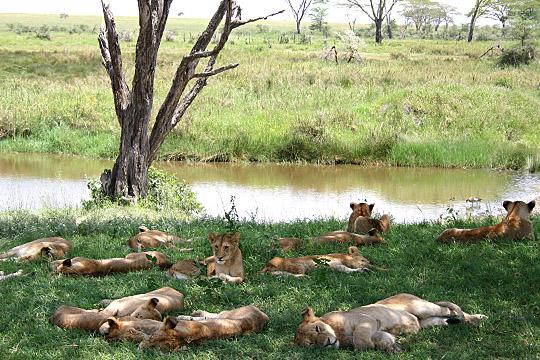 Seronera River - Tanzania, East Africa