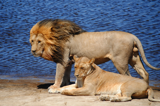 Payne African Safari July 2011 1