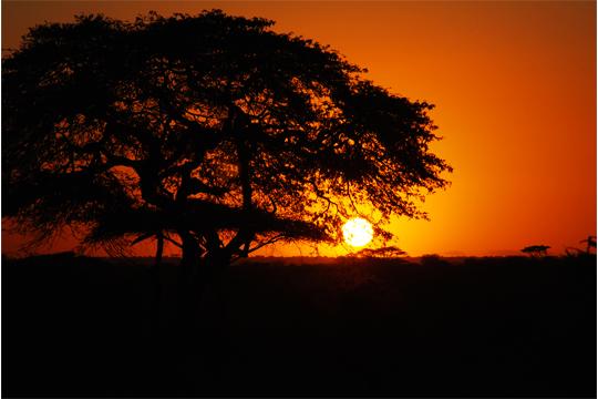 Payne African Safari July 2011 Sunset