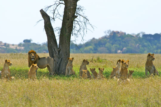 Pitts African Safari (14)