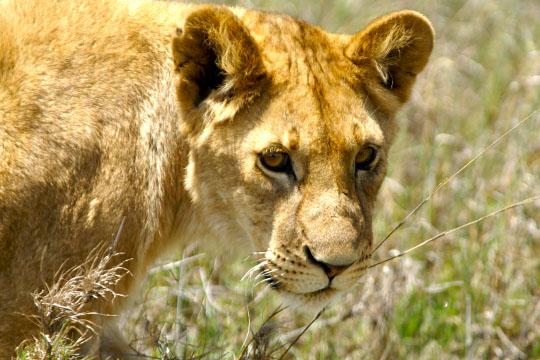 Pitts African Safari (15)