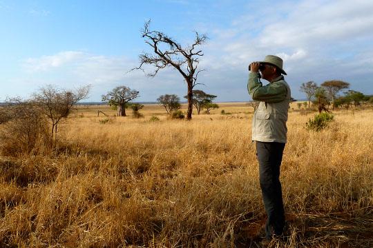 Pitts African Safari (2)