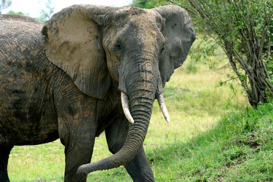 Pitts African Safari (6)
