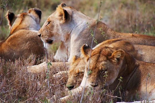 Tanzania Dry Season Trip 2