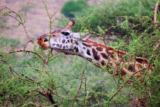 Tanzania Dry Season Trip 3