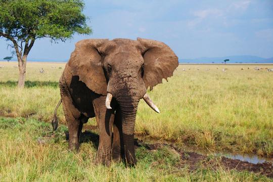 Tanzania Dry Season Trip 1