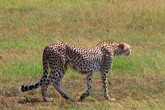 Tanzania Dry Season Trip 5