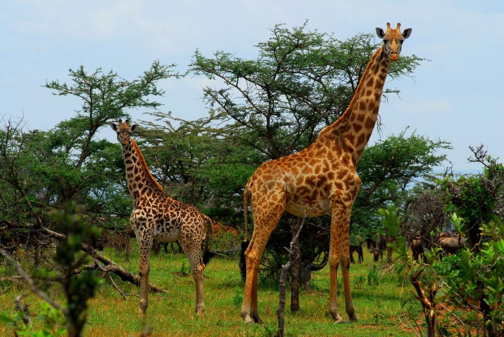 Tanzania 10012011 157