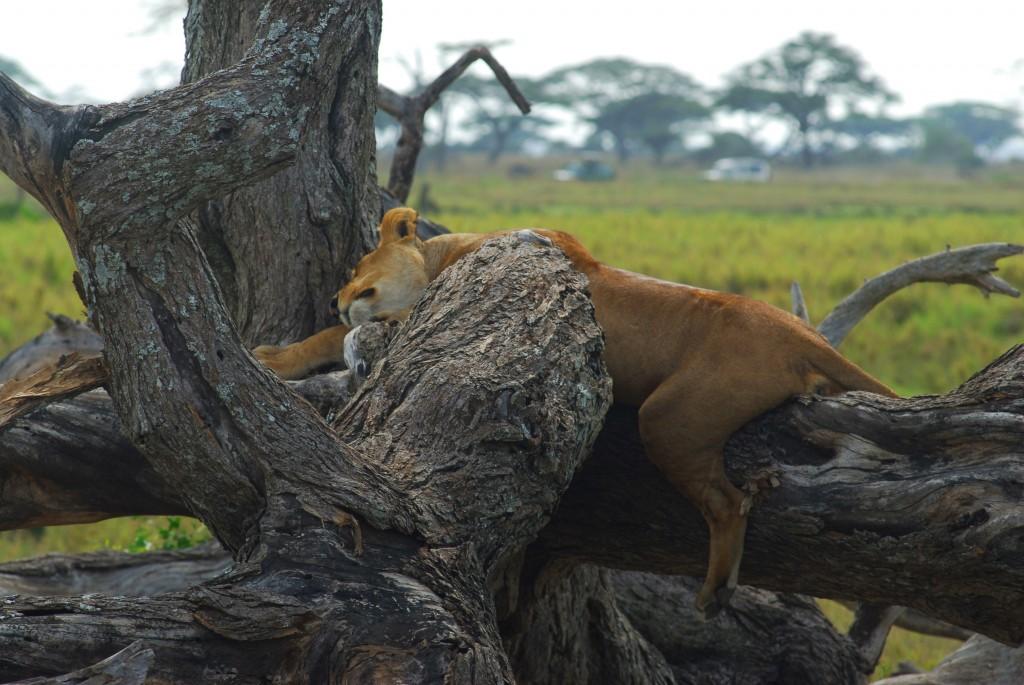 Tanzania 10012011 284