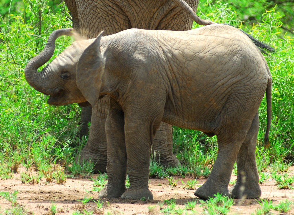 Tanzania 10012011 337-c