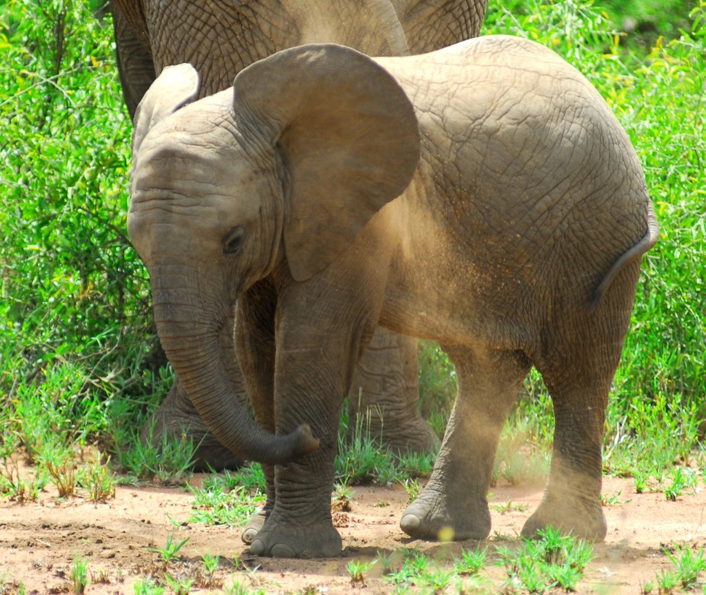 Tanzania 10012011 339-c