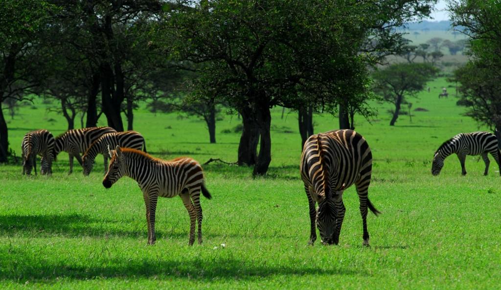 Tanzania 10012011 437