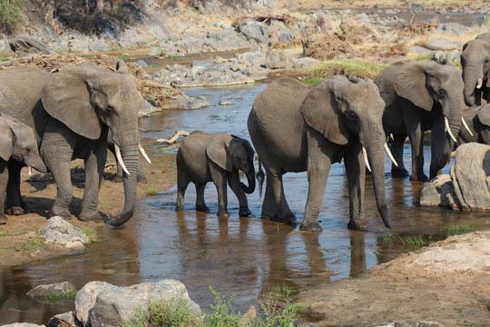 Tanzania and Zanzibar_0003_Layer 10