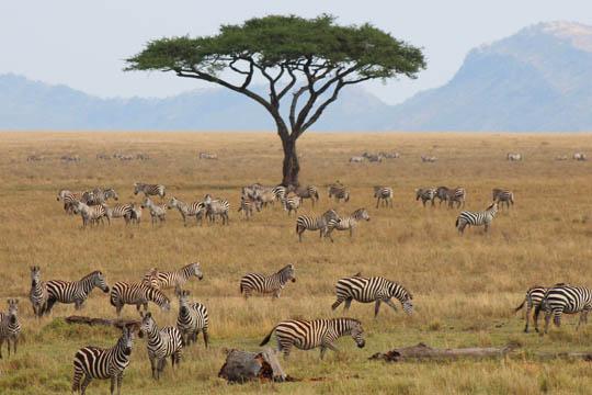 Tanzania and Zanzibar_0009_Layer 4