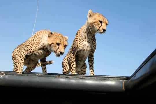 Africa Dream Safaris Vehicles_1 (1)