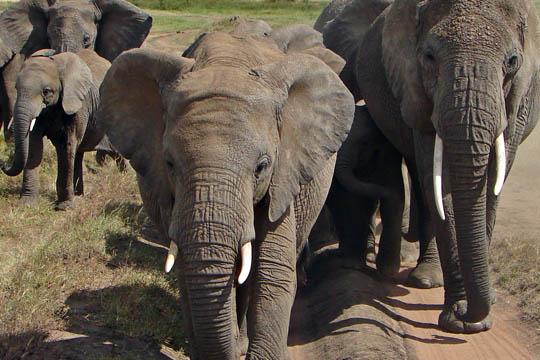 Africa Dream Safaris Vehicles_1 (8)